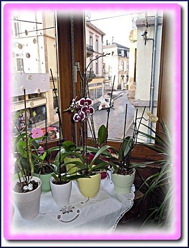 orchidees-martine-2.jpeg