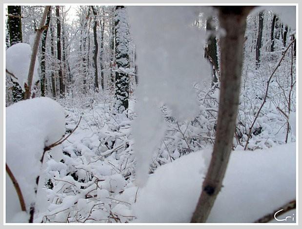 31 janv. 2010 Cri 0175