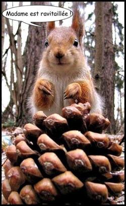 Suite des écureuils en justice,