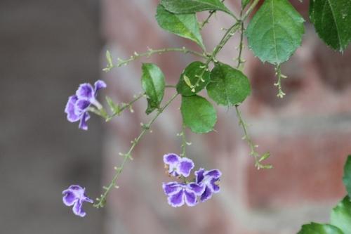 toujours les fleurs du Costa Rica
