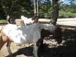 Equitation le 31/07/13
