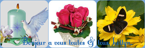 Fleur Adonis FAIT ♥♥♥