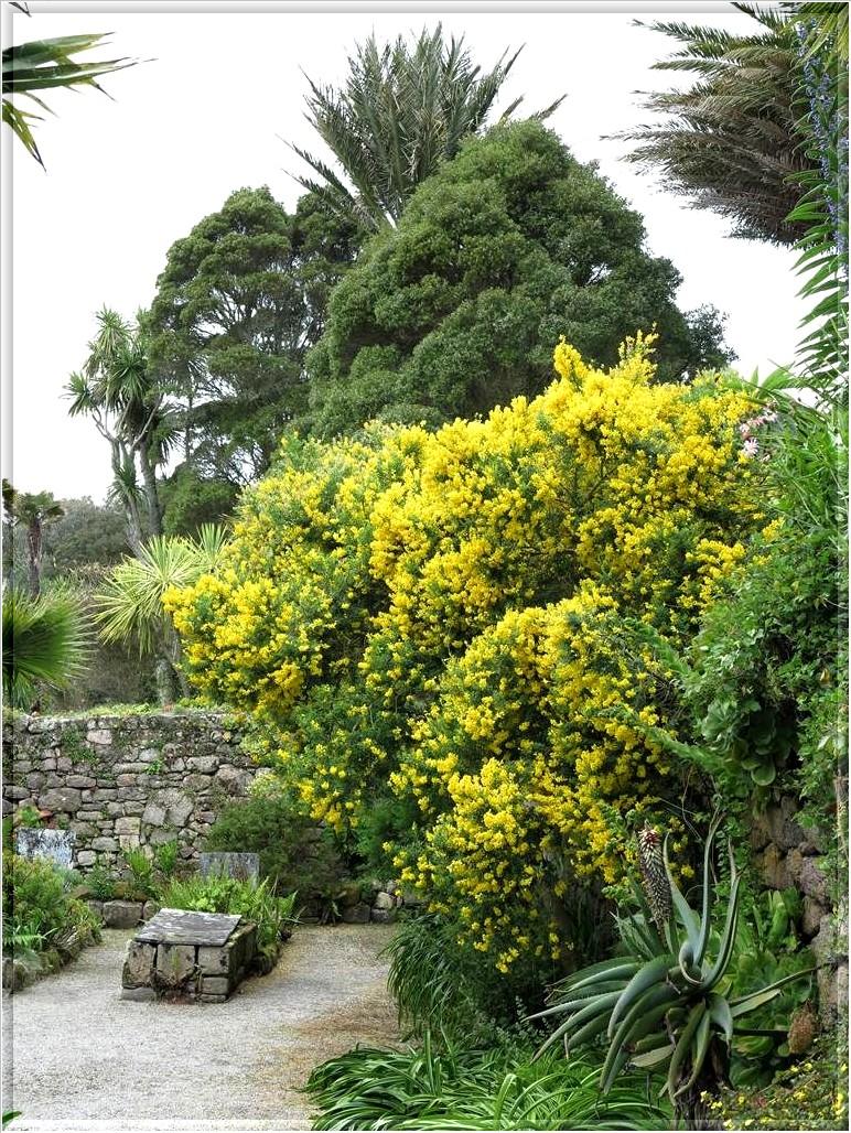 Les jardins de l'Abbaye de Tresco