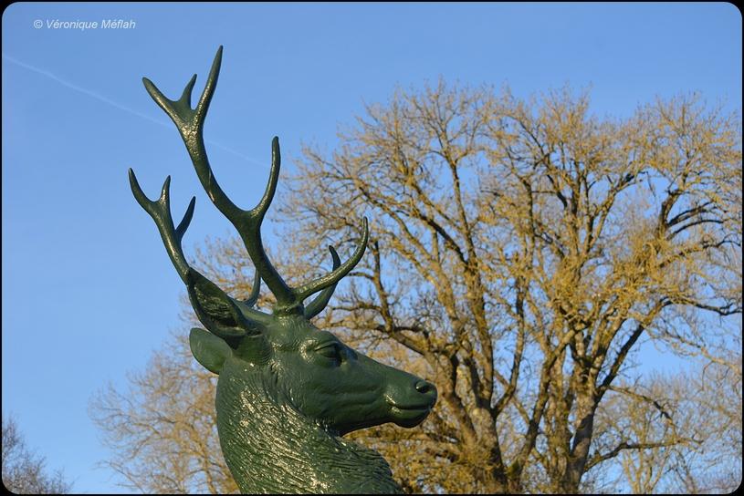 Le seigneur de la forêt de Rambouillet : Le cerf