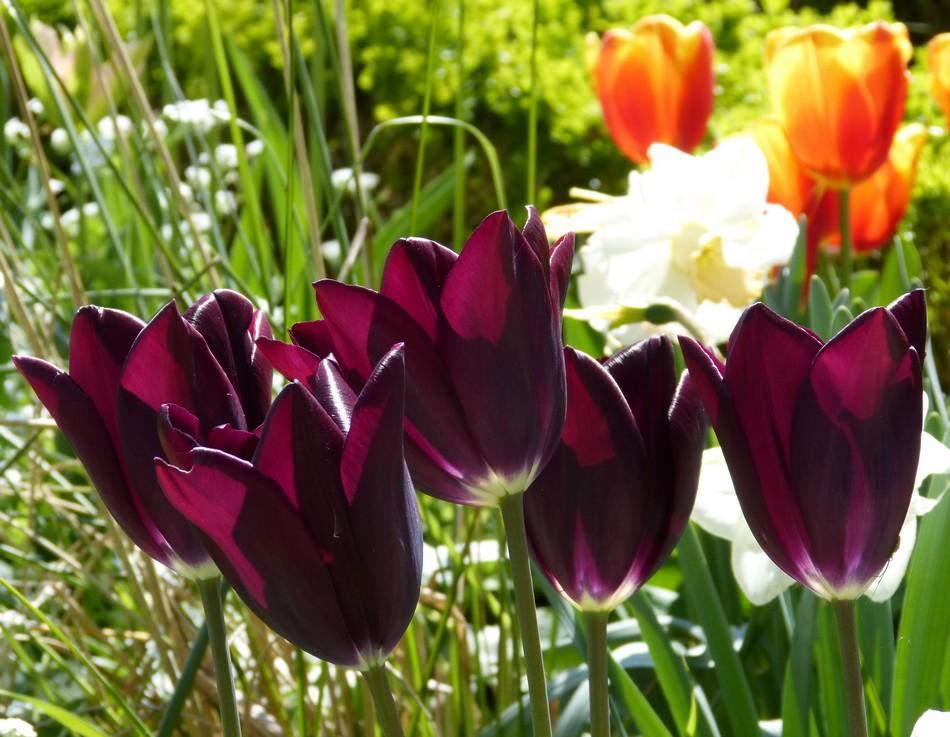 Au jardin des plantes en avril