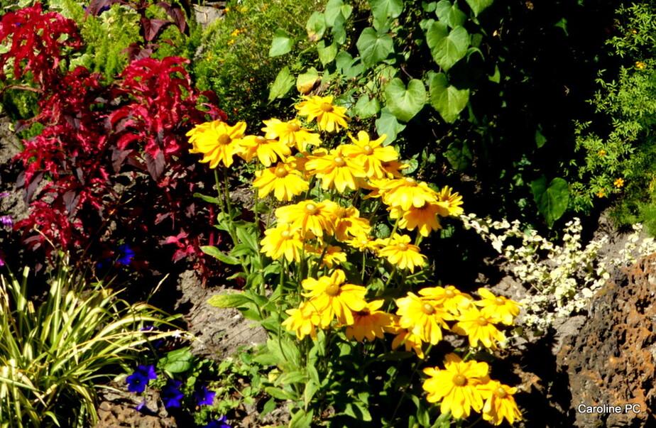 *La promenade fleurie en août 2016*
