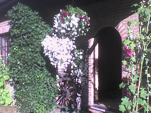Mon jardin,mes coquins