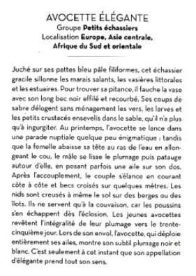 Le-Petit-Livre-des-Oiseaux-4.JPG