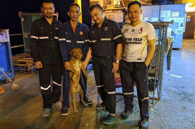 Les employés d'une plateforme pétrolière sauvent un chien en pleine mer