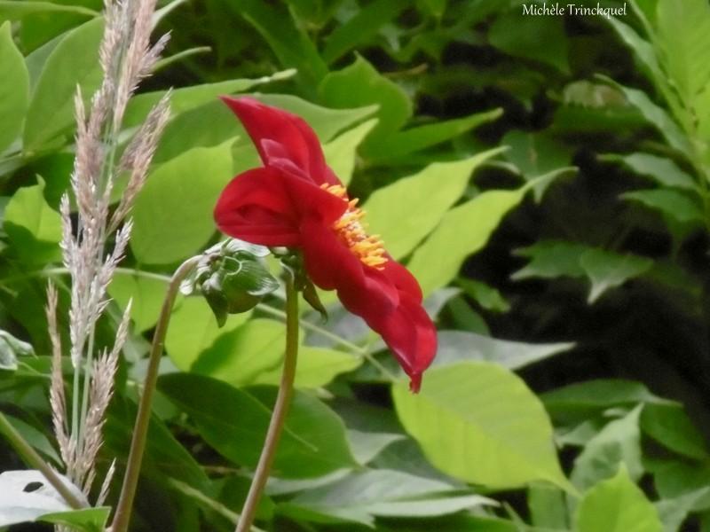 Une balade dans les Jardins de Cloggs à GAUSSAN (65), le 14 juillet....