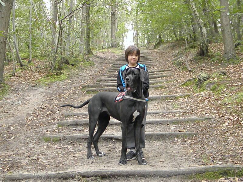 Sami & Jyane en forêt, le 11 septembre 2016