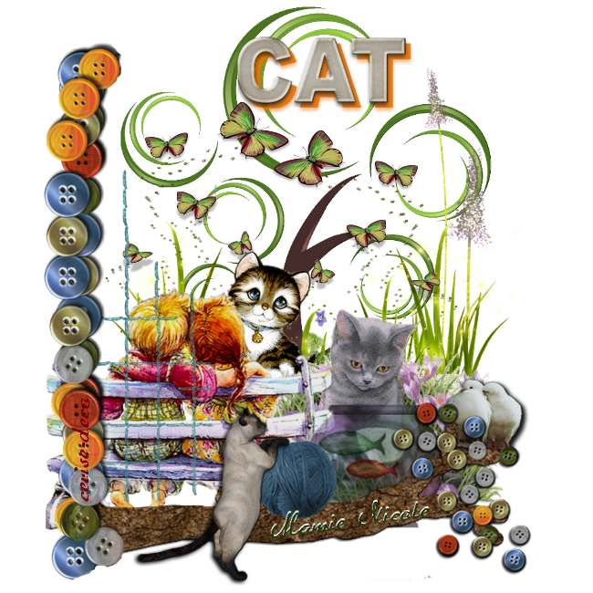 première participation au cluster des chats