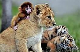 Vos animaux préférés !