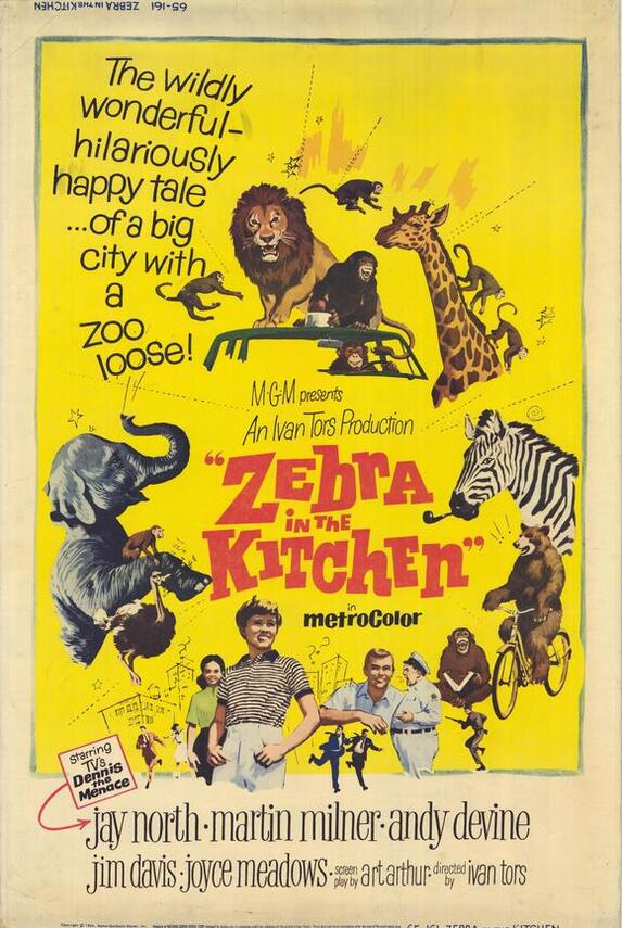 ZEBRA IN THE KITCHEN BOX OFFICE USA 1965