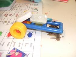 Oui, l'escargot est fort !