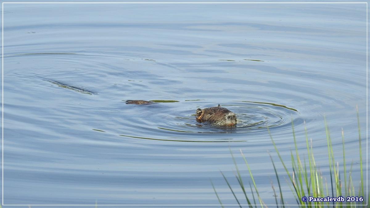 Réserve ornitho du Teich - Septembre 2016 - 8/11