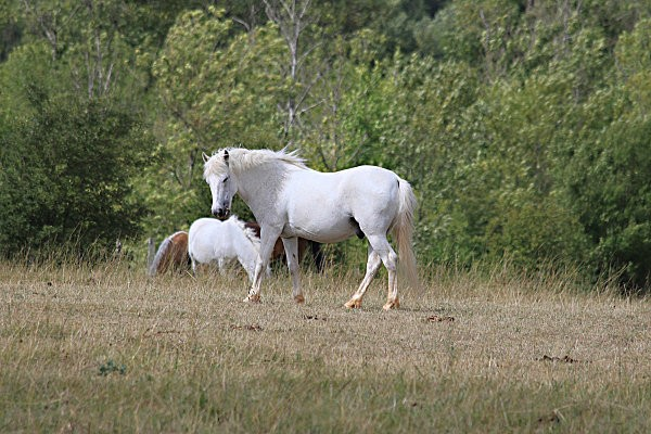 chevaux -3-