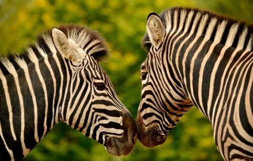 Coronavirus et le animaux