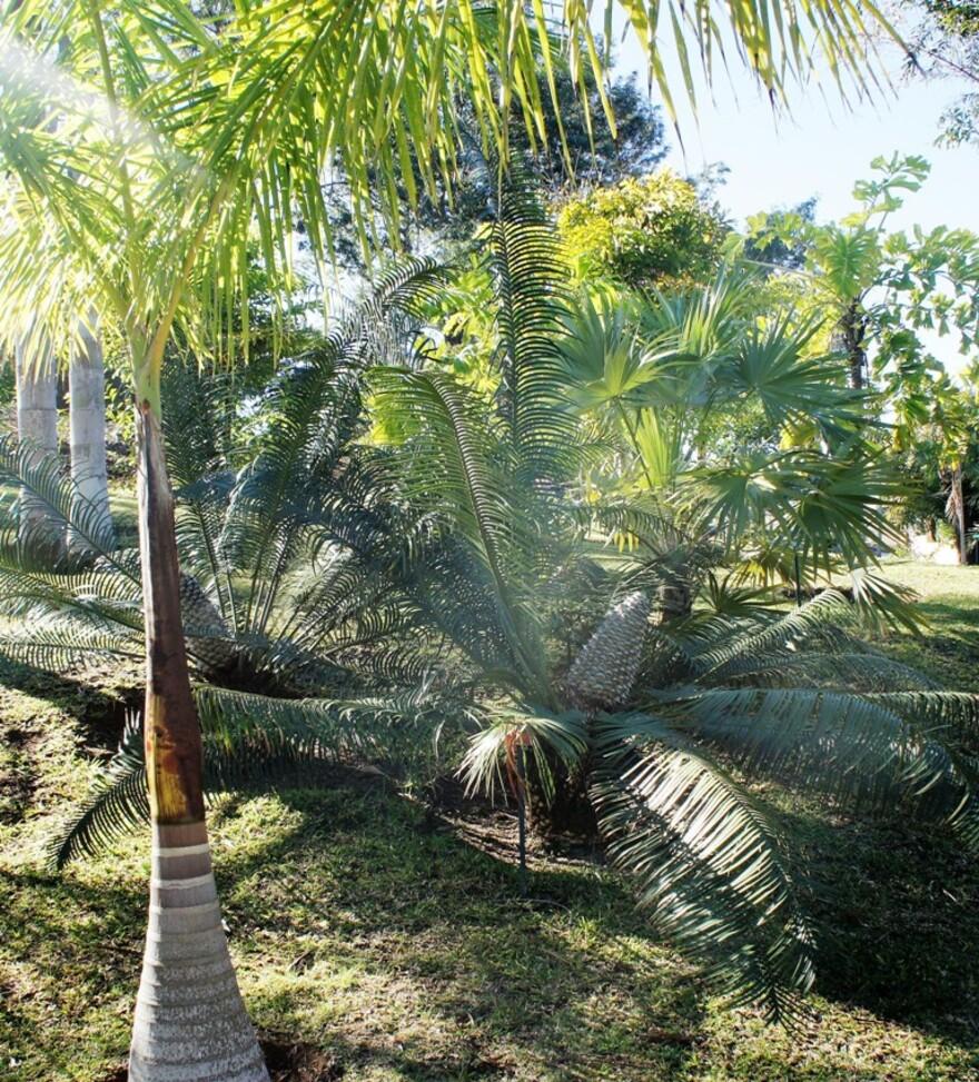 LE TAMPON - Parc des Palmiers (4/8)