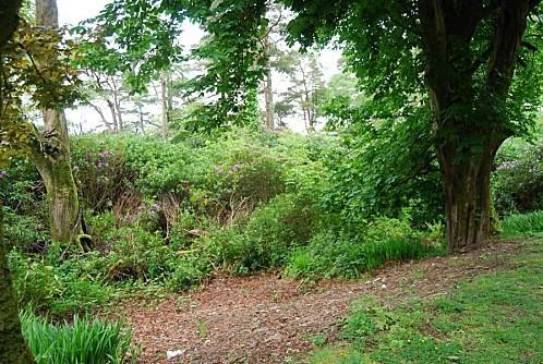Abbaye de Kilemore - Le parc 006