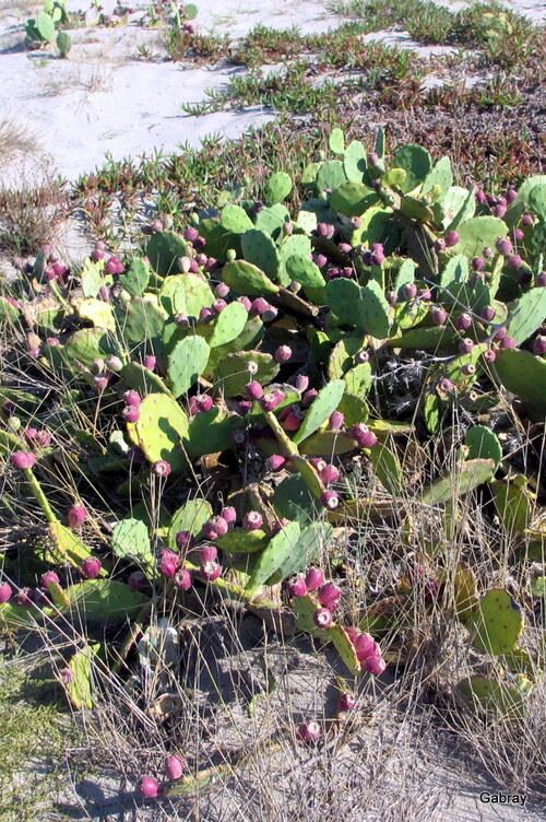 Le Barcarès: plage et couleurs