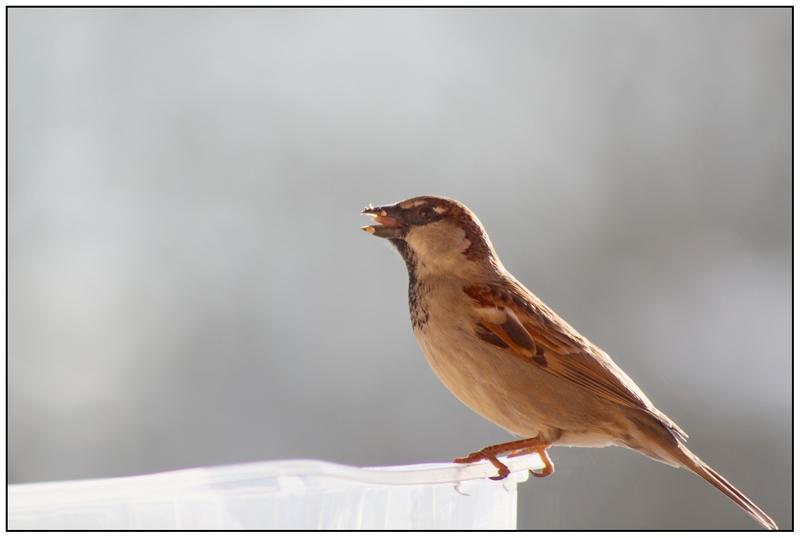 les oiseaux  fevrier 2015