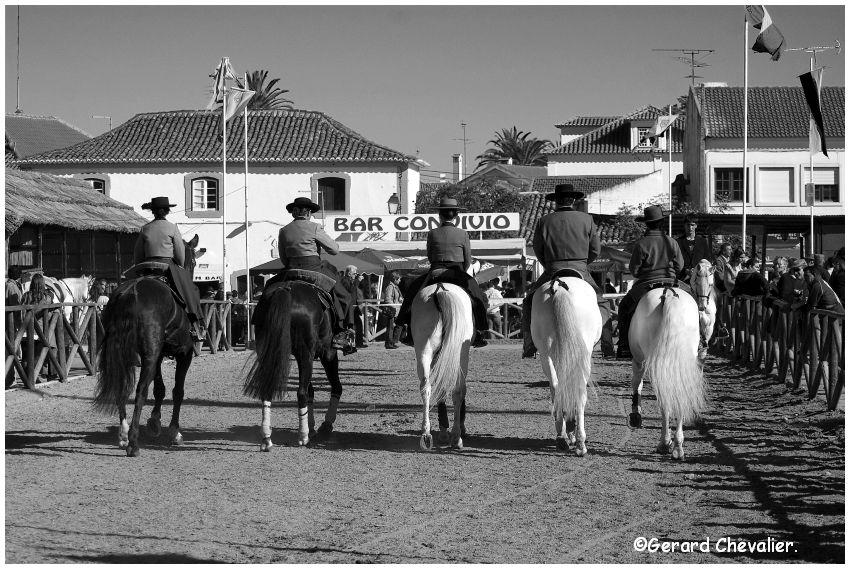 Feira nacional do cavalo - Golegã - Portugal #2