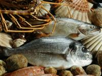 Poissons-crustacés...