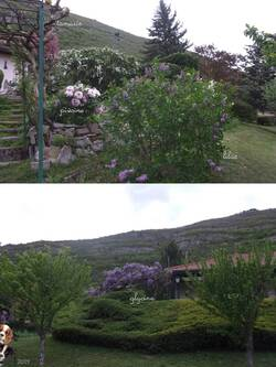 ... Petit tour au jardin pour admirer fleurs, et, ma peinture