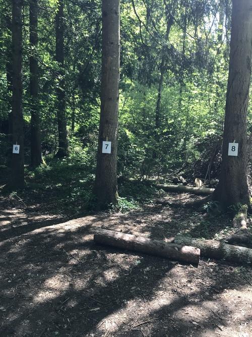 Sorties en forêt du 28 mai et du 11 juin