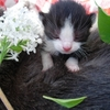 chatons-autres-animaux-autres-chats-sarreinsming-france-5955926776-944936.jpg
