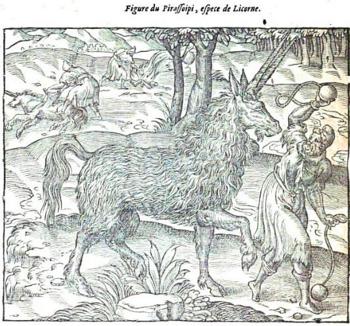 pirassoipi, ambroise paré, 1664