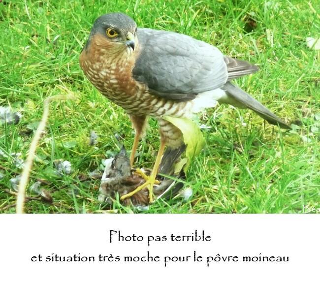 """Photo Préférée """"moche"""""""