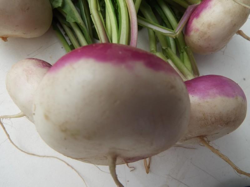 """""""Deux légumes de saison"""" ..."""