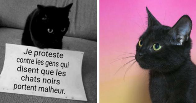 13 bonnes raisons d\u0027accueillir un chat noir