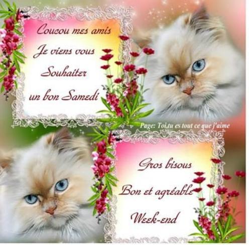 Bonne Journée de Samedi, Les Ami(e)s - améthyste