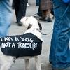 terrorist-dog.jpg