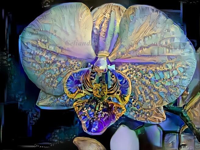 Dreaming...Fleur papillon .