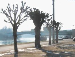 tilleuls des buttes fevrier2010