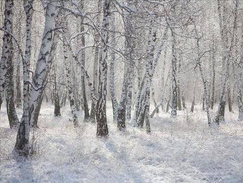C'est toujours l'hiver ....