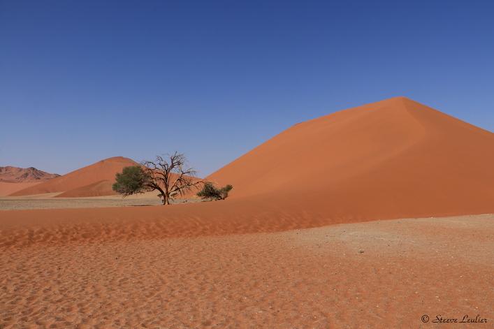 Erg du Namib, la dune 45