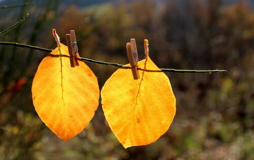 Lessive d'automne