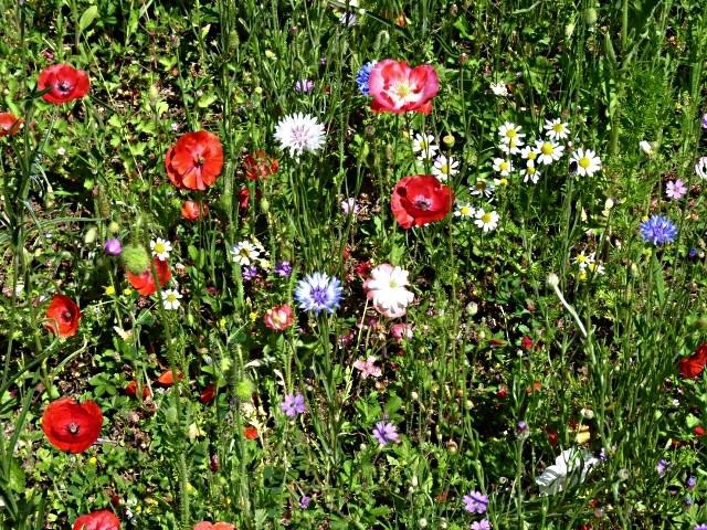 Flore lorraine 10 mp13 11 06 2010
