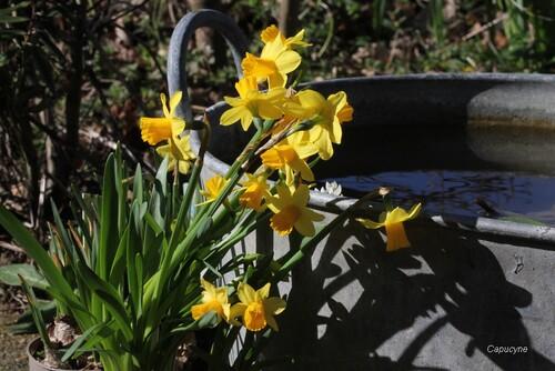 Couleurs de printemps au jardin