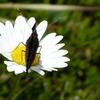 Papillon après la fermeture