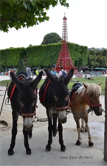 La photo du weekend : Les ânes du Champ de Mars