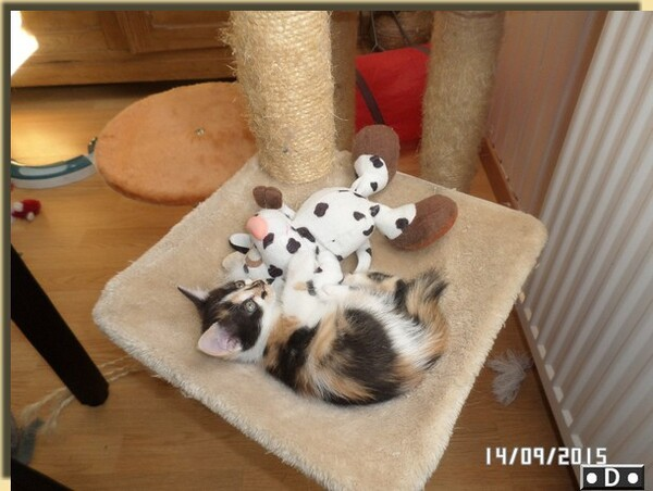 Familys'Domino vous présente .... Lylou