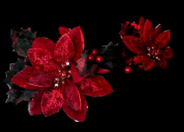 Fleurs De Noël  1( 2019)