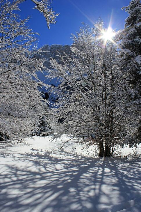 Fonds,neige,hiver,froid,blanc,