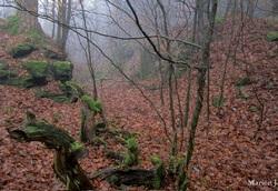 Les vestiges d'une tranchée murée